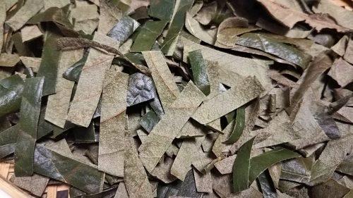 ビワの葉カット