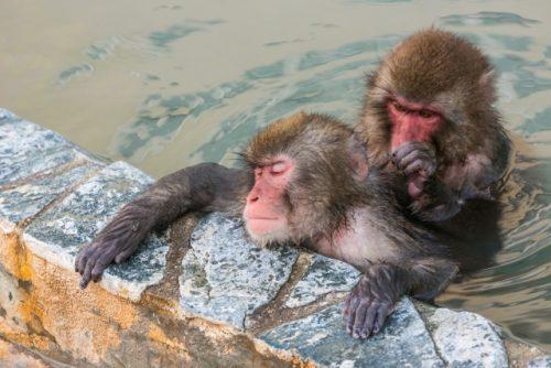 サルの温泉